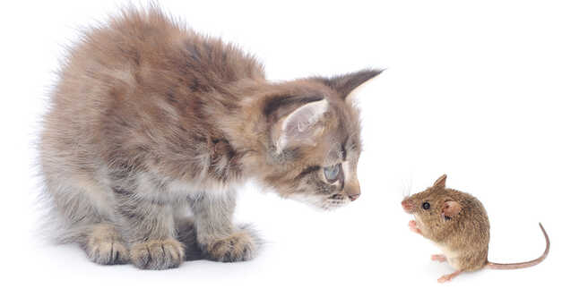 mouse-and-kitten-1