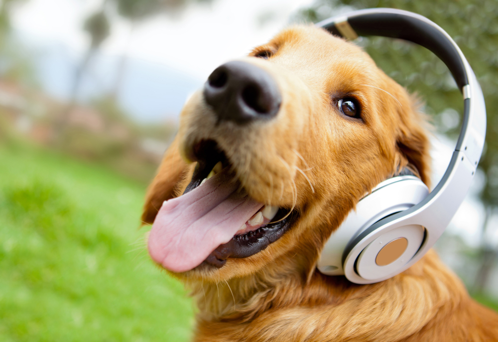 Cute%20dog%20listening%20to%20music%20with%20headphones%20-%20outdoors
